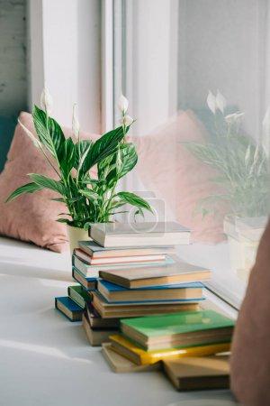 Photo pour Plantes en pot et livres sur le rebord de la fenêtre - image libre de droit