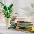 Potted plant with green leaves and books on window...