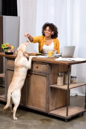 happy young woman working at home on kitchen and feeding dog