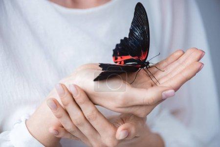 Photo pour Vue recadrée de fille avec beau papillon vivant dans les mains, isolé sur gris - image libre de droit