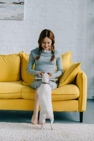attractive pregnant woman reading book and palming jack russell terrier in living room