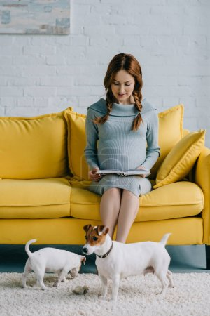 attractive pregnant woman reading book, jack russell terriers on floor in living room