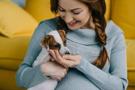 attractive pregnant woman holding jack russell terrier in living room