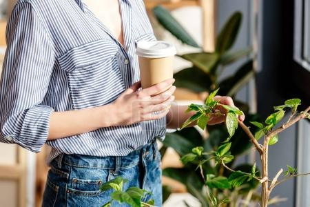 cropped image of young woman with coffee touching potted plant