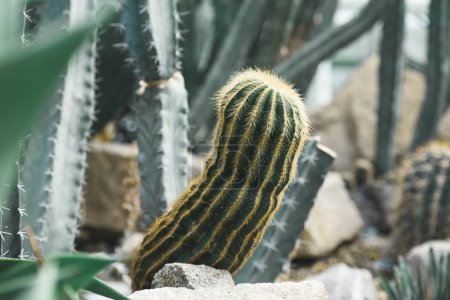 close up of green cactuses in tropical garden
