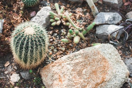 high angle view of cactuses and stone in tropical garden