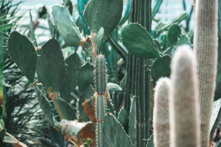 Photo for Close up of green cactuses in tropical garden in summer - Royalty Free Image
