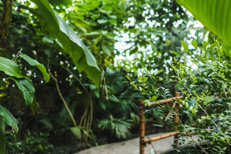 tropical rainforest greenhouse with various plants and road