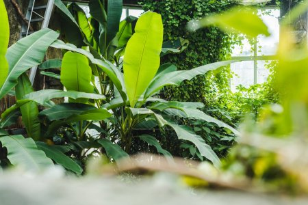 beautiful tropical rainforest greenhouse with various plants and window on background