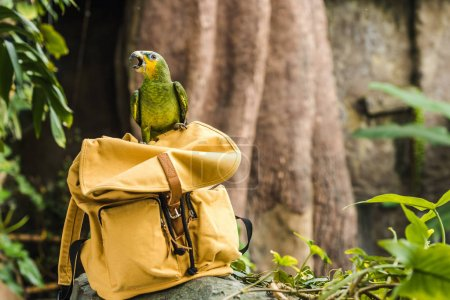adorable green afrotropical parrot perching on vintage yellow backpack in rainforest