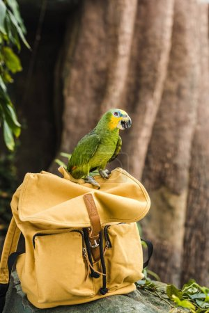 beautiful green afrotropical parrot perching on vintage yellow backpack in rainforest
