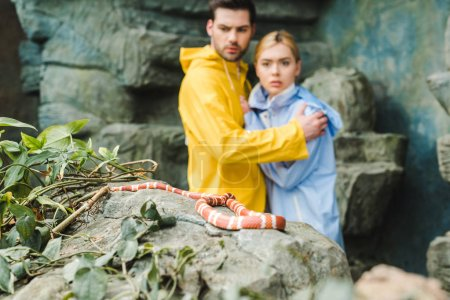 scared young couple in raincoats terrified of snake on rock