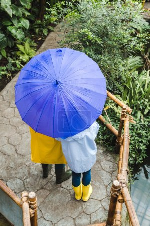high angle view of couple in raincoats under umbrella at park with exotic plants