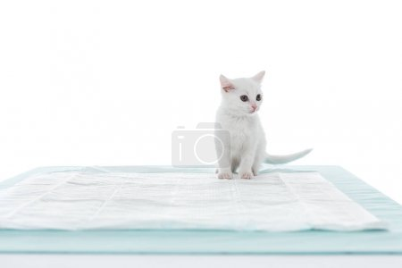 front view of kitten on table isolated on white background