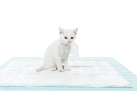 adorable kitten on table isolated on white background