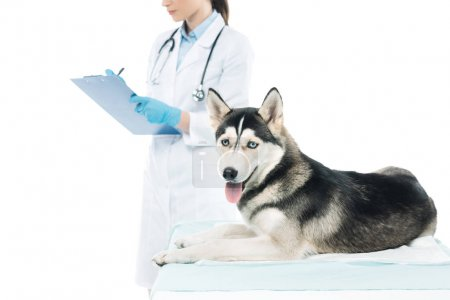 cropped image of female veterinarian writing in clipboard and husky isolated on white background