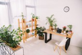 interior of business office with green plants