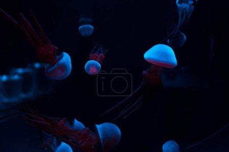 Photo pour Méduses avec voyants néons bleus et roses sur fond foncé - image libre de droit