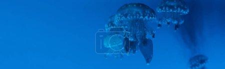 Vue panoramique de méduses tachetées sur fond bleu