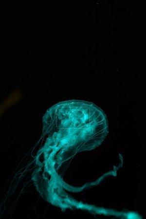 Photo pour Méduse avec tentacules en vert néon lumière sur fond noir - image libre de droit
