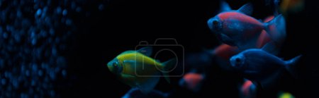 Panoramic shot of fishes with neon light on dark background