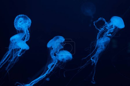 Photo for Jellyfishes with tentacles in blue neon light on dark background - Royalty Free Image