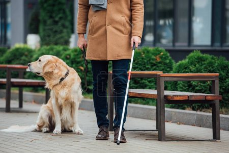 Photo for Cropped view of blind man with walking stick and guide dog on urban street - Royalty Free Image
