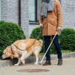 Cropped view of man with walking stick and guide dog walking on street