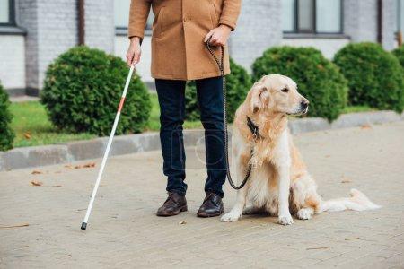 Photo pour Vue recadrée de l'aveugle avec chien-guide et bâton de marche sur la rue urbaine - image libre de droit