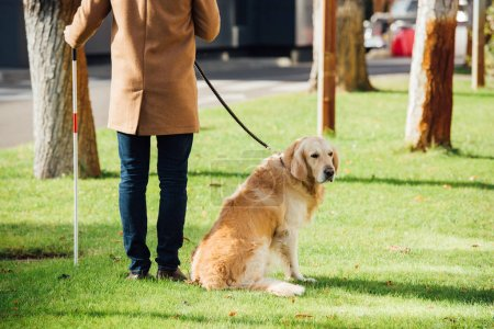 Photo pour Cropped view of blind man with walking stick and guide dog standing on grass - image libre de droit