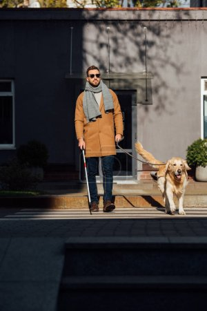 Photo pour Blind man walking with guide dog and walking stick on crosswalk - image libre de droit