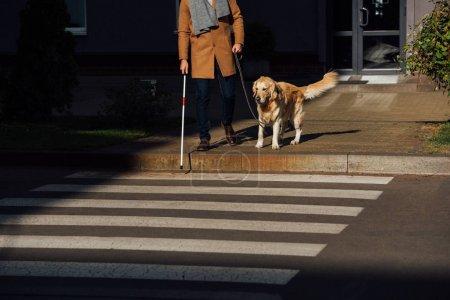 Photo pour Vue recadrée de l'homme avec bâton et chien-guide debout à côté de la passerelle - image libre de droit