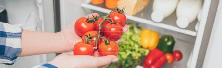 Photo for Cropped view of woman holding tomatoes near open fridge with fresh food on shelves, panoramic shot - Royalty Free Image