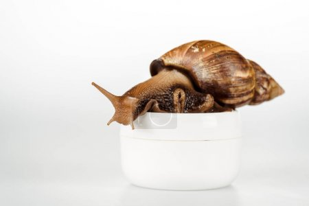 Photo for Brown snail on cosmetic cream container on white background - Royalty Free Image