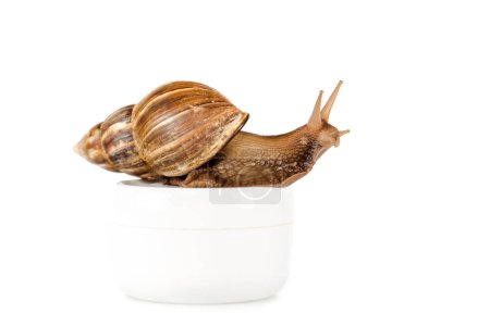 Photo for Brown snail on cosmetic cream container isolated on white - Royalty Free Image
