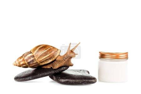 Photo pour Escargot brun sur pierres de spa près d'un contenant de crème cosmétique isolé sur blanc - image libre de droit