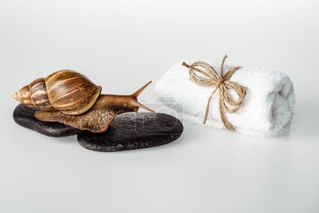 Photo for Brown snail on spa stones near cotton towel on white background - Royalty Free Image