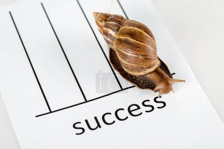 Photo for Slimy brown snail on white paper with success lettering isolated on white - Royalty Free Image