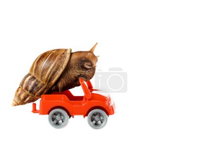 Photo for Slimy brown snail on red toy car isolated on white - Royalty Free Image