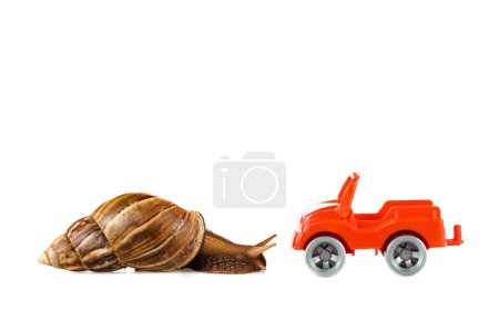 Photo for Slimy brown snail near red toy car isolated on white - Royalty Free Image