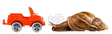 Photo pour Escargot brun visqueux près de voiture jouet rouge isolé sur blanc, panoramique - image libre de droit