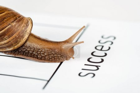 Photo for Close up view of slimy brown snail on white paper with success lettering isolated on white - Royalty Free Image