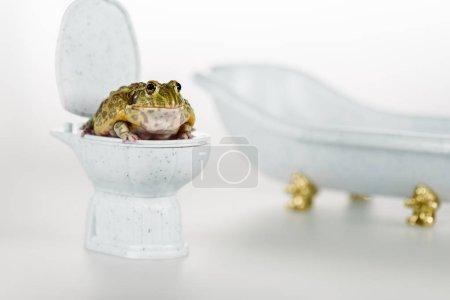 selektiver Fokus des lustigen grünen Frosches auf kleiner Toilettenschüssel in der Nähe von Luxus-Badewanne isoliert auf Weiß
