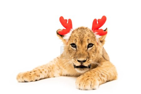 cute lion cub in red deer horns headband isolated on white