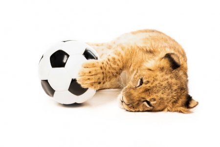 cute lion cub near soccer ball isolated on white