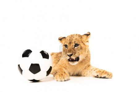 Photo for Cute lion cub near soccer ball isolated on white - Royalty Free Image