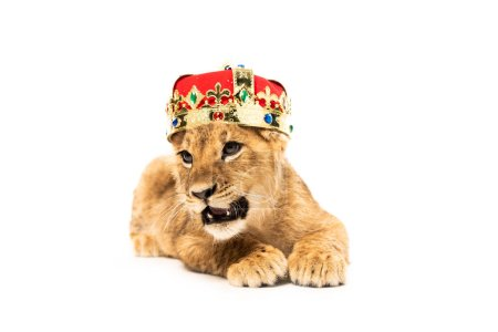 Photo for Cute lion cub in golden and red crown isolated on white - Royalty Free Image