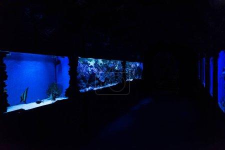 Photo pour Poissons nageant sous l'eau dans des aquariums à éclairage bleu en océanarium - image libre de droit
