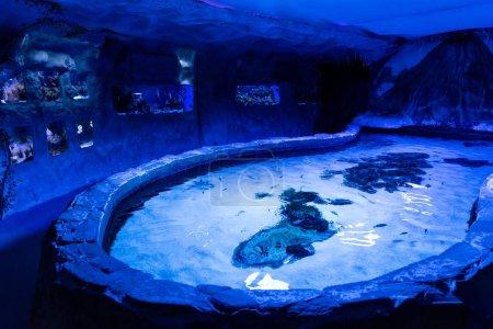 Photo pour Poissons nageant sous l'eau dans les aquariums et piscine avec éclairage bleu dans l'océanarium - image libre de droit