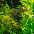 Small fishes swimming under water among green seaw...